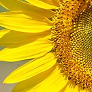 SunFlower by Wviolet28