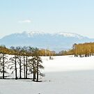 Snowy pass above Escalante, UT by Linda Sparks