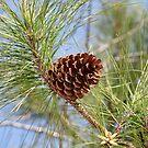 Pine Cone by DebbieCHayes