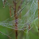 Morning Web by Rick Stockwell