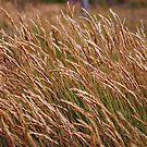 Long Grass by Paul Finnegan