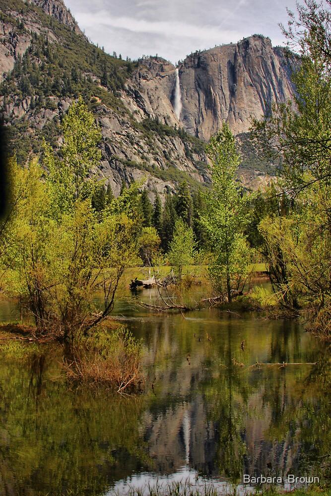 Yosemite Reflections by Barbara  Brown