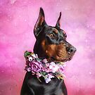 DOBERMANN PROJECT | (7) AILLA by Peggy Colclough