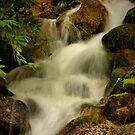 Lower Fall by Barbara  Brown