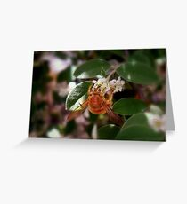 Pollen-Nation Greeting Card