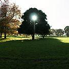 One Tree Hill Turama Panorama by Adam Jones