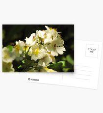 Brier Sweet Postcards