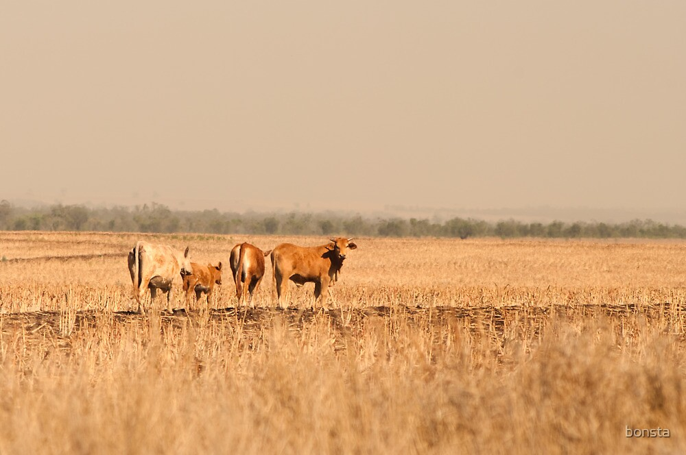 Cows in haze by bonsta