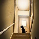 Auf der Treppe von BATKEI