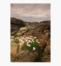Sanna Bay, Ardnamurchan, Highland, Scotland Photographic Print