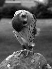 Shy Bird by Ryan Davison Crisp
