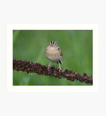 Eye To Eye With A Grasshopper Sparrow Art Print