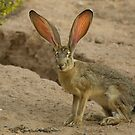 All Ears by Sue  Cullumber