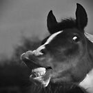 Funny Horse Photograph by Nick Lewis