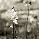 Wildflowers by cmpotts