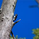 The Woodpecker by thruHislens .