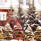 Christmas Trees at Tremblant by Yannik Hay