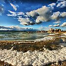 Foamy Beach by Barbara  Brown