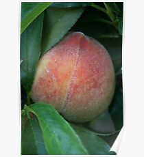 First Peach of the Season! Poster