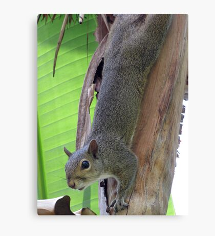 I Can Hang With The Best of 'Em! Canvas Print