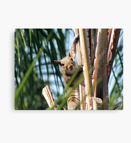 I Can See You Canvas Print