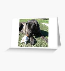 Taking good care of you ! Greeting Card