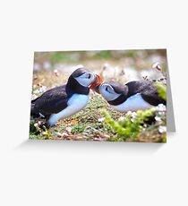 Married Bliss (Atlantic Puffins) Greeting Card