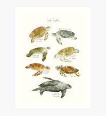 Lámina artística Tortugas de mar