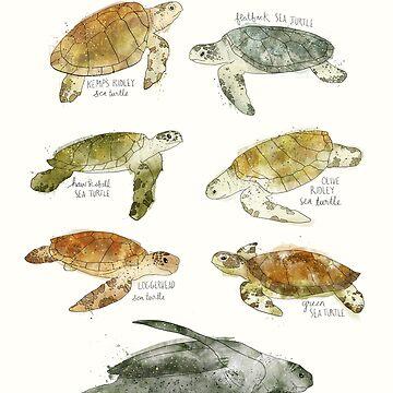 Meeresschildkröten von AmyHamilton