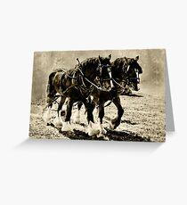 Shire Horses Greeting Card