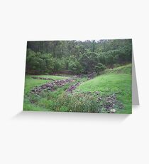 Gully of the Cane Toads Greeting Card