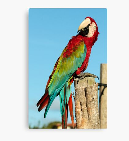 Red & Green Macaw Canvas Print