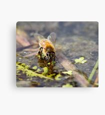Replenishing at the Water Hole Metal Print
