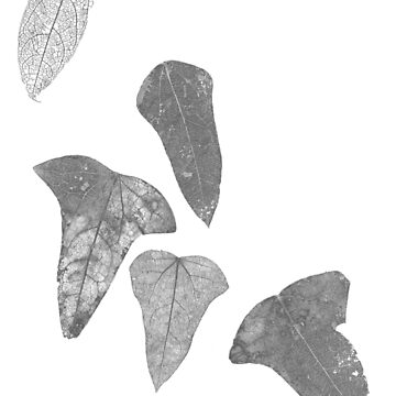 leaves by wiebke