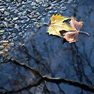 Autumn lovers by laurentlesax