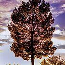 Backlit Tree by George Lenz