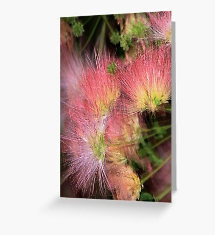 Mimosa Explosion Greeting Card