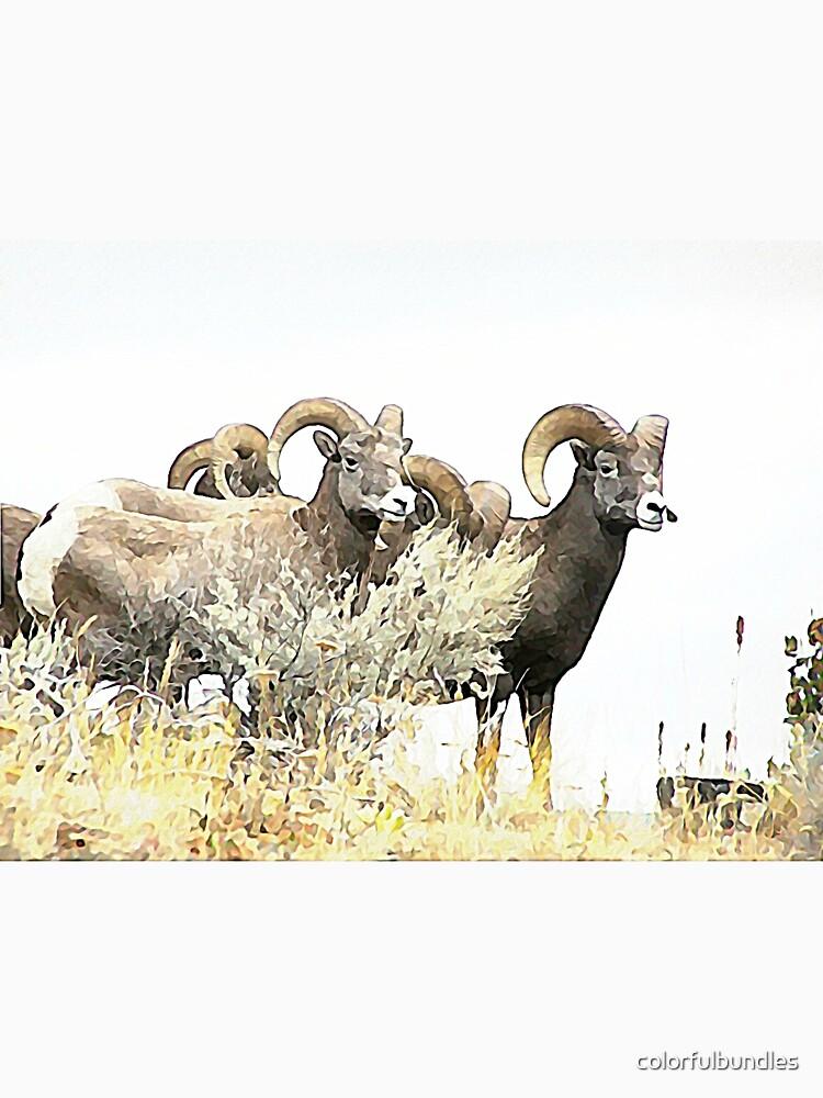 Western Wildlife, the Bighorn Sheep of British Columbia by colorfulbundles