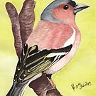 Chaffinch by Martina Fagan