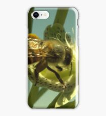 270 Bumble Bee iPhone Case/Skin