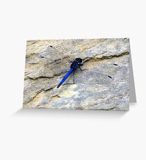 Blue dragonfly in her transparent dress! Greeting Card