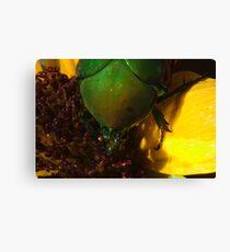 272 Green Shield Stink Bug Canvas Print