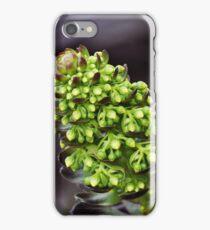 Aeonium Arboreum iPhone Case/Skin