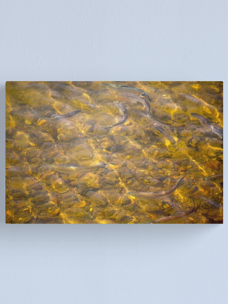 Alternate view of Fishing with my camera Canvas Print