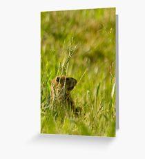 Groundhog in Field Greeting Card