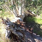Fallen Tree is still Alive and Growing by TeAnne