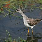 Yellowlegs In clear water by Janika