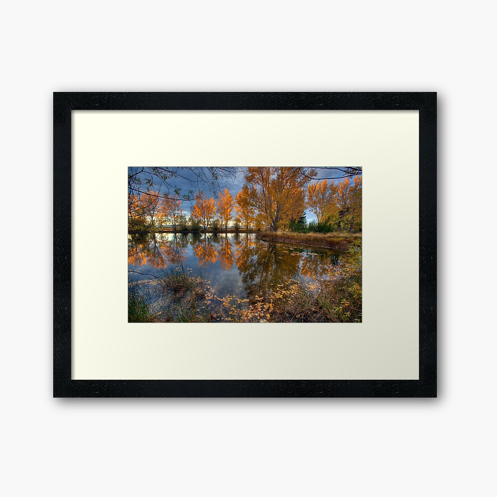 Autumn in Otago County Framed Art Print