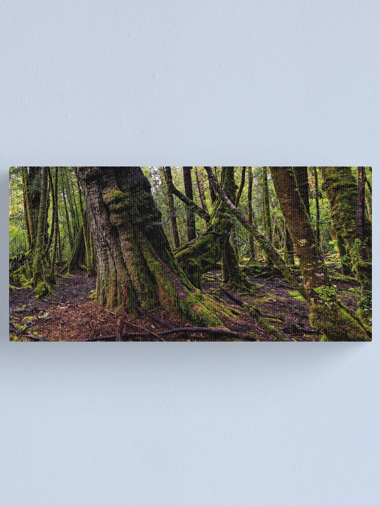 Alternate view of The clearest way to the Universe is through a forest wilderness Canvas Print