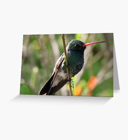 Broad-billed Hummingbird ~ Male Greeting Card